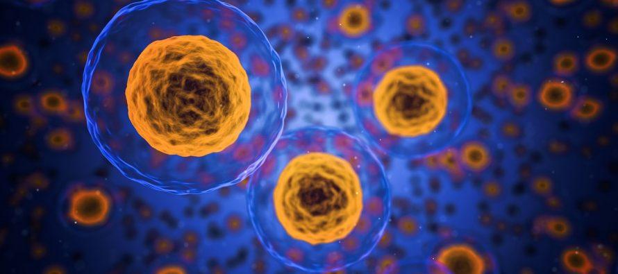 Otkrivena brzina smrti ćelije?