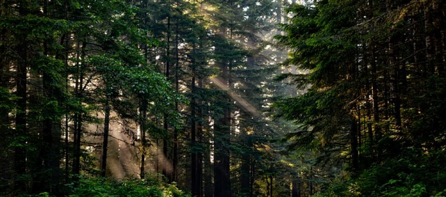 Kako klimatske promene utiču na drveće?