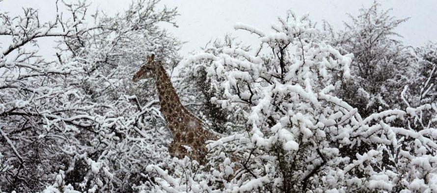 U Južnoj Africi pao sneg?