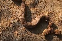 Otkrivena zmija sa dve glave?