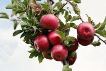 Zašto treba jesti jabuke?
