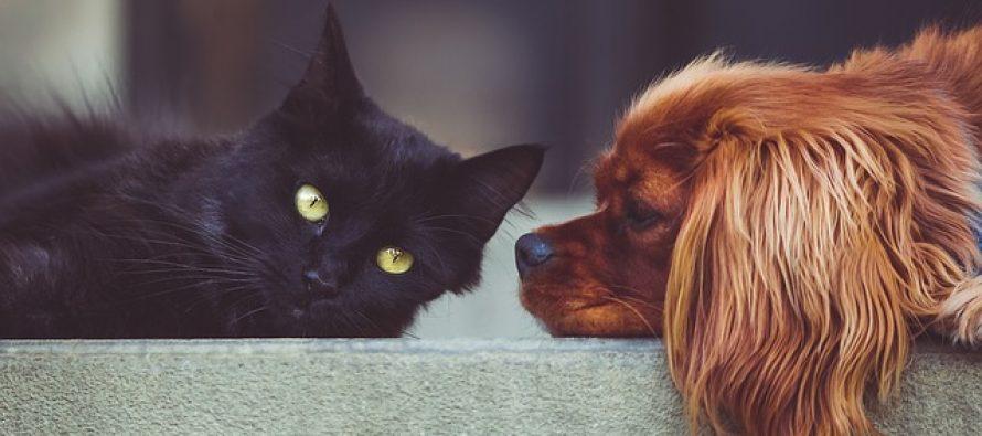 Svetski dan životinja – 04. oktobar