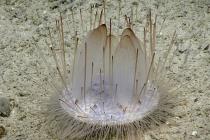 Otkrivene nove životinjske vrste u vodama Kariba?