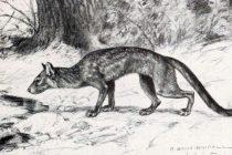 Ovako je izgledao najveći praistorijski pas