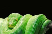 Zoološki vrt napravio prvu teretanu za gojazne reptile
