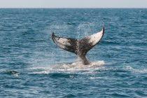 Neverovatni borci: Životinje koje su se vratile sa ivice izumiranja!