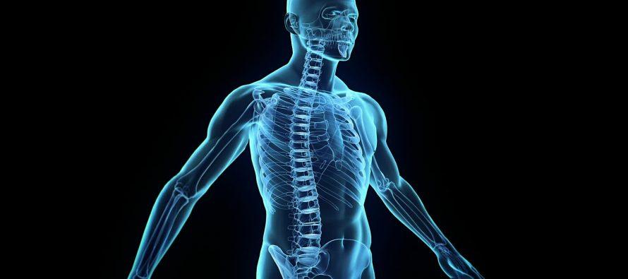 Šta čini ljudsko telo?