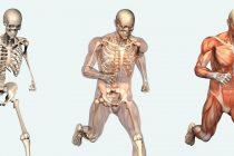Šta sve ljudsko telo može da izdrži
