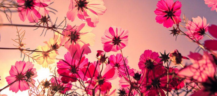 Koje su to biljke, koje po preporuci NASE, čiste vazduh u kući?