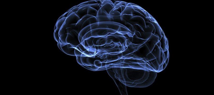Kog pola je mozak?