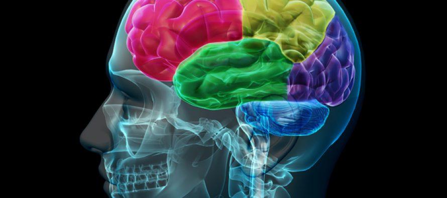 Zašto je ljudski mozak jedini koji je narastao?