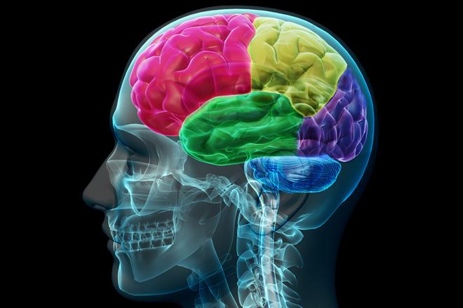 mozak i lobanja