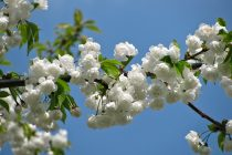 Koje bolesti se pogoršavaju u proleće