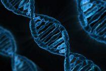 Stvaranje veštačke DNK – samo za naučna ispitivanja?