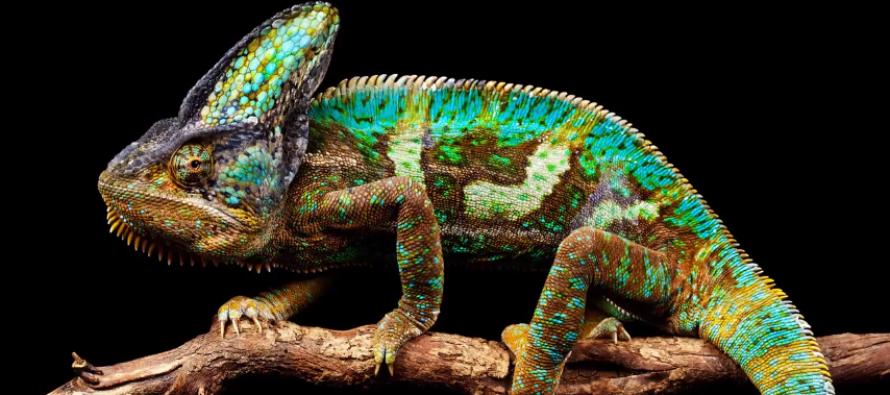 SUPER NAUKA: Kako životinje menjaju boju?