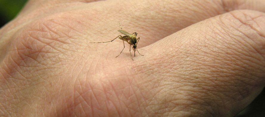 Tretman za ublažavanje ujeda komarca