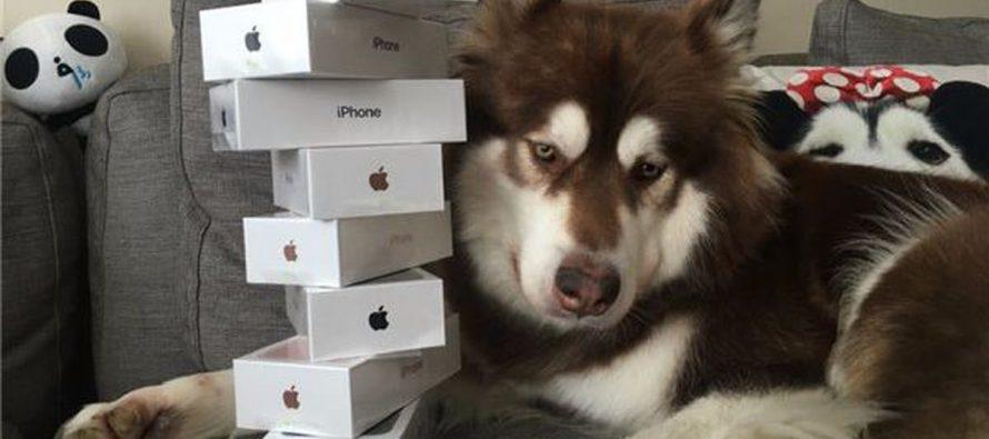 Koko – pas koji ima osam novih iPhone-a