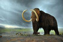Izumrli pre 4.000 godina – sad postaju zaštićena vrsta