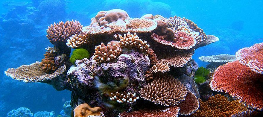 Pacovi ugrožavaju koralne grebene?