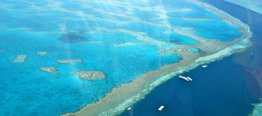 Koralni greben u ogromnoj opasnosti!