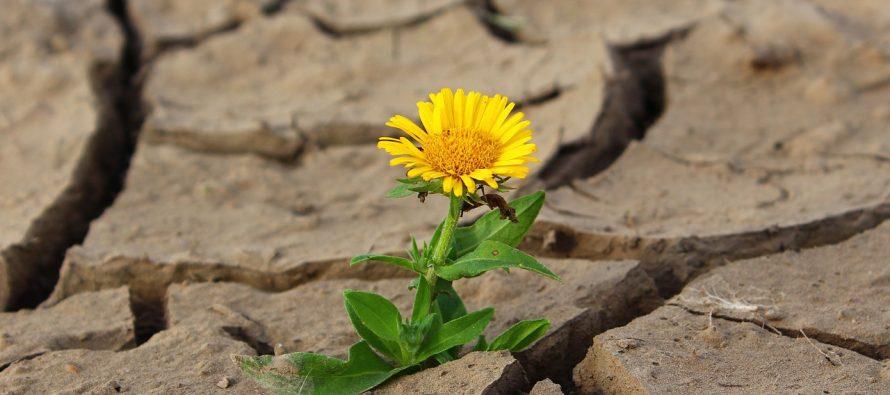 Čudo prirode: Cveće prekrilo pustinju u Kaliforniji