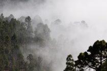 Mreža koja pravi vodu – od magle!