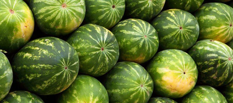 Da li ste znali da je lubenica povrće? I to lekovito!
