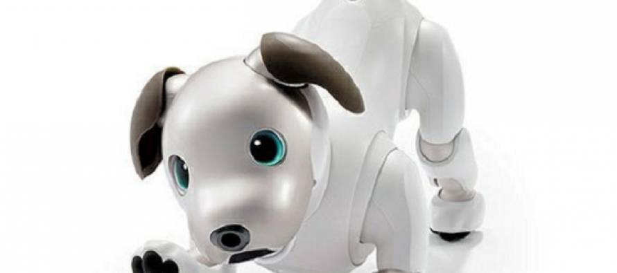 Posle 11 godina, Soni oživeo Aiba- robo- psa
