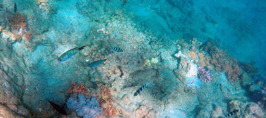 Ovako izgledaju životinje dubokih voda Havaja