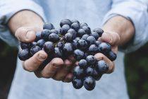 Iznenađujući zdravstveni benefiti grožđa