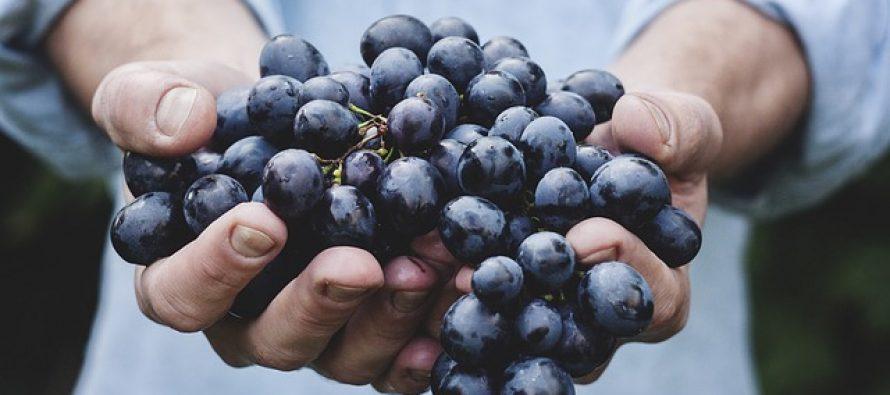 Kako grožđe utiče na naš organizam?