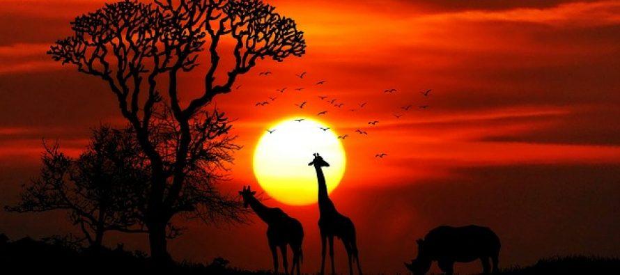 Zanimljiva čuda Afrike