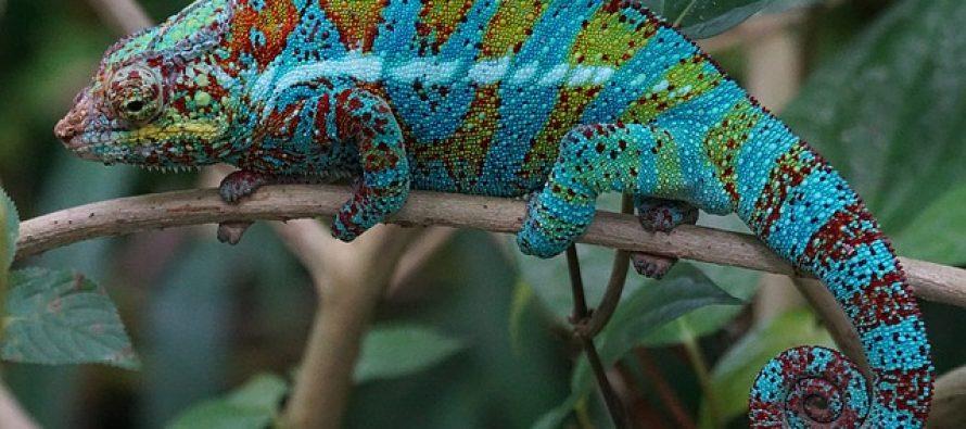 Kako životinje menjaju boju?