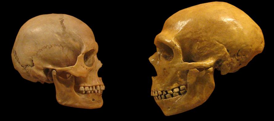 Rekonstrukcija mozga neandertalca