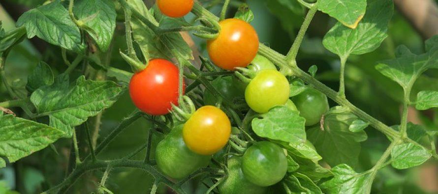 Zdrave namirnice koje loše utiču na organizam