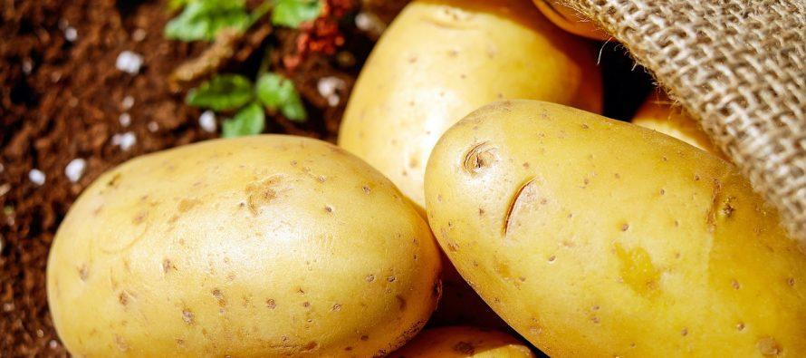 Krompir – povrće koje se gaji širom sveta
