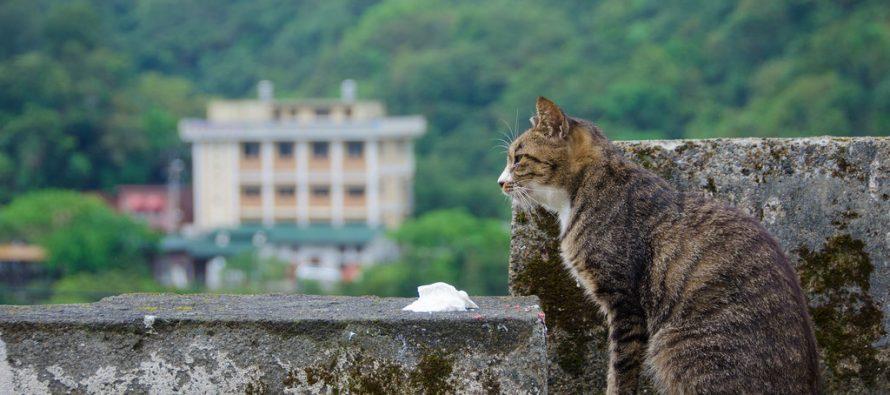 U kojem gradiću caruju mačke?