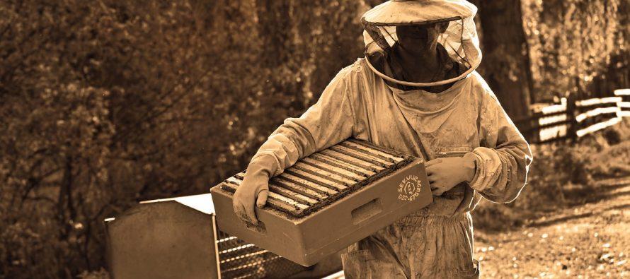 Kako su nastale pčele ubice?