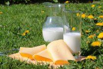 Da li ste znali da sir jača naš imuni sistem?