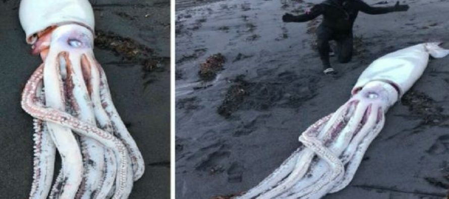 Pronađena morska neman na jugu Novog Zelanda?