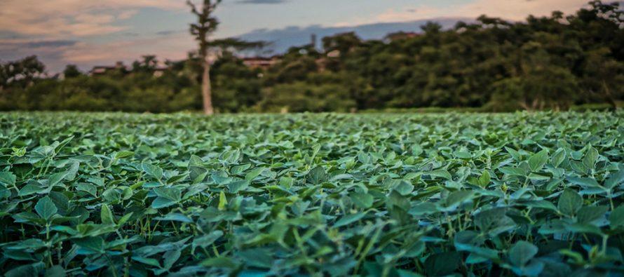 Kako u Brazilu čuvaju šume?