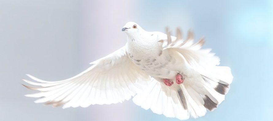 Međunarodni dan mira – 21. septembar