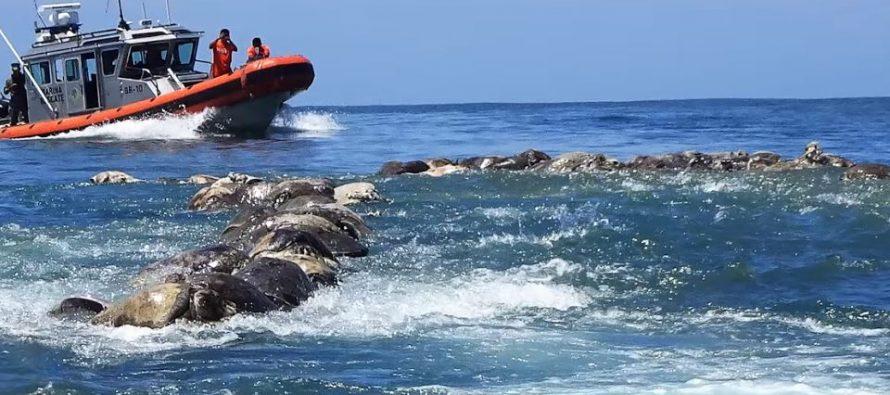Tužan prizor na obalama kod Meksika!