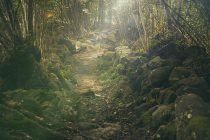 Pasivno obnavljanje divljine: ako voliš prirodu ostavi je na miru