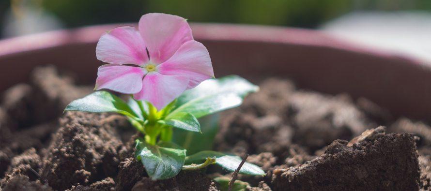 Kako zaštititi biljke tokom zime?