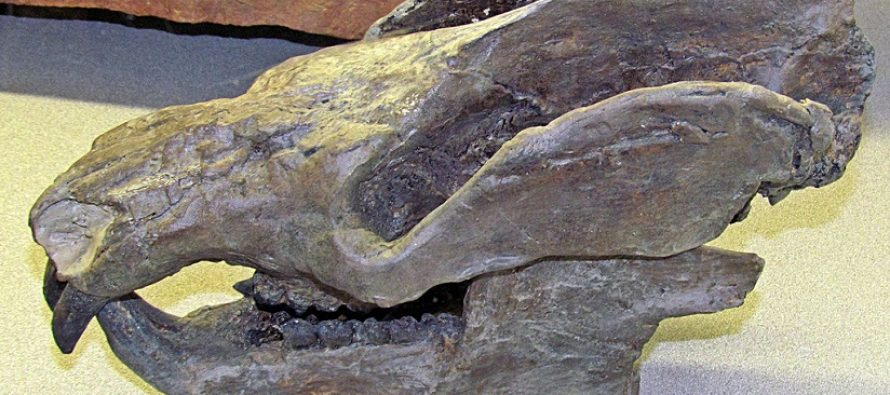 Otkriveni fosilini ostaci izumrlog srodnika sisara i njegovih potomaka!