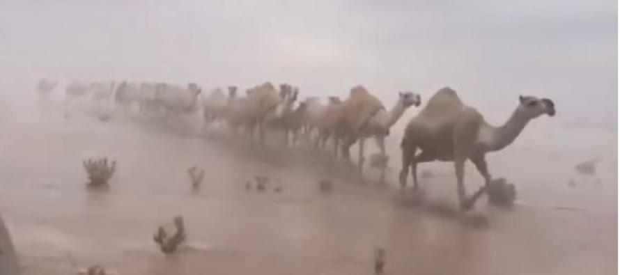 More usred pustinje – nezapamćene padavine u Saudijskoj Arabiji