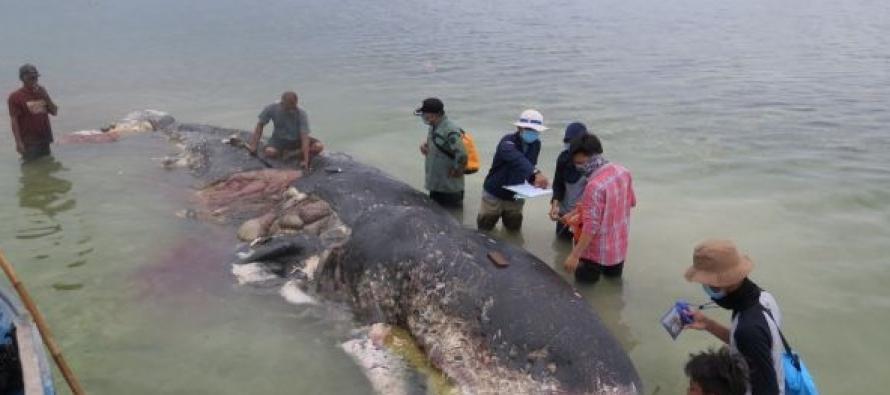 U utrobi kita pronađena plastika!