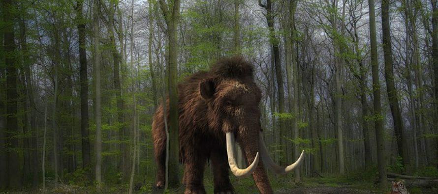 Pronađen prvi dokaz kako su ljudi zapravo lovili gigantske mamute