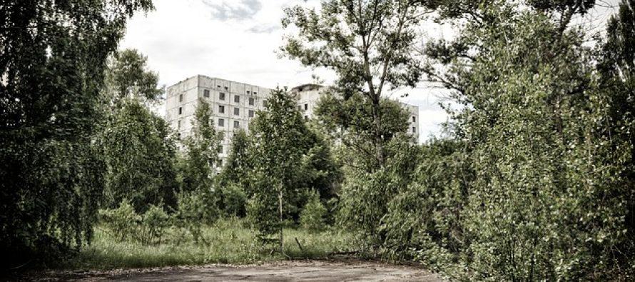 Šta se to dešava sa životinjama u Černobilju?